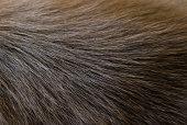 Deep brown dog fur texture