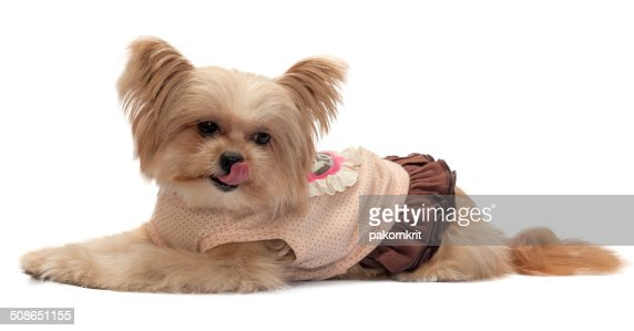 Dog Getting Hungry : Stock Photo