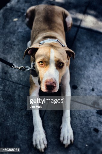 Dog Gone it.jpg : Stock Photo