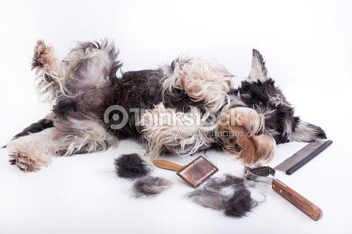 Dog Grooming Equipment Stock Photo Thinkstock