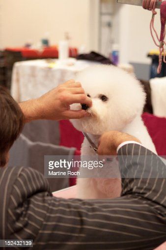 Dog Grooming In Macon