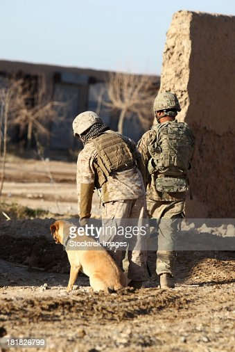 A dog handler takes care of his military working dog that is trained to detect military and home made explosives.