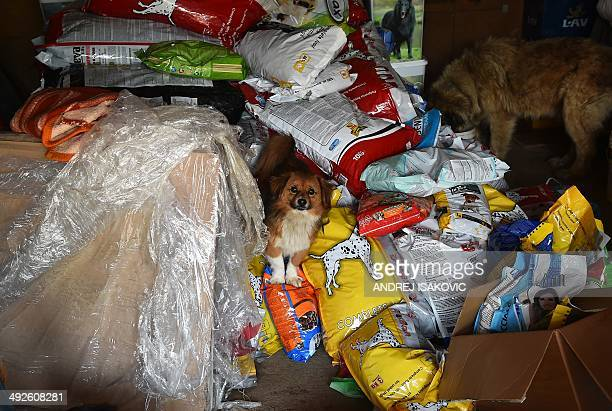 A dog hides among bags of animal food as an other eats in the animals shelter in the village of Drazevac near flooded Serbian town of Obrenovac on...