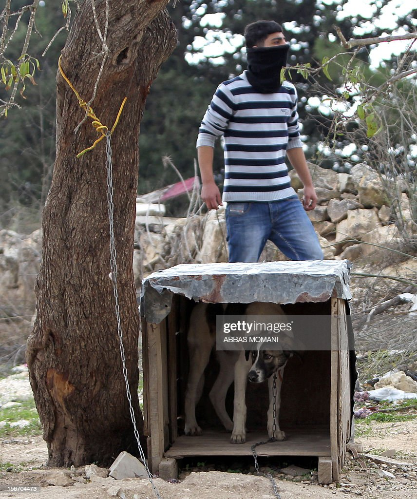 A dog hides in his kennel as a Birzeit University Palestinian student holding rocks looks towards clashes with Israeli soldiers at the Atara checkpoint close to the university as they protest against Israel's military action on the Gaza Strip, on November 19, 2012. Israeli air strikes across the Gaza Strip killed 13 people, raising the Palestinian death toll to 90 as Israel's relentless air campaign entered its sixth day. AFP PHOTO / ABBAS MOMANI