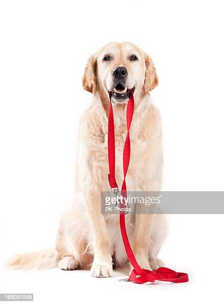 Dog holding leash