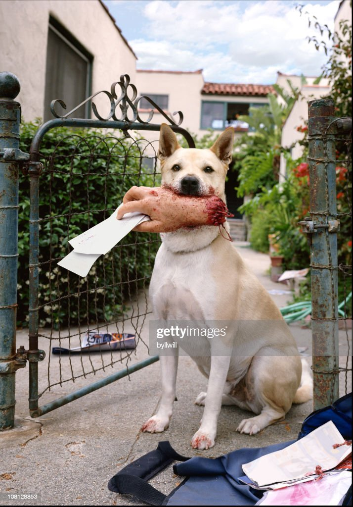 Dog Holding Mailman's Hand in Mouth : Stock Photo
