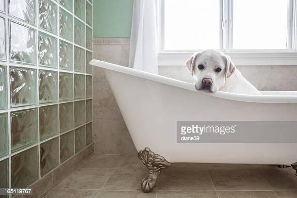 Dog in a bathtub