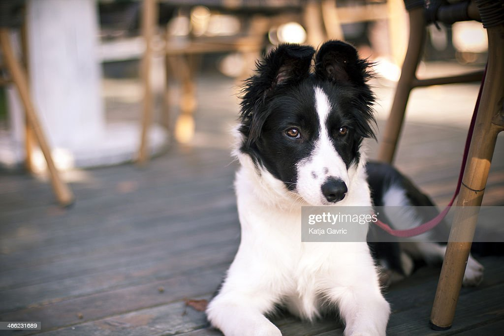 Dog in a caffe.