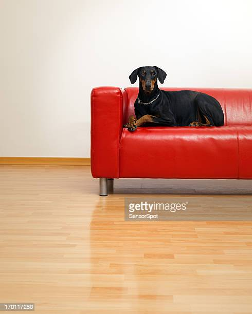 Dog in a sofa