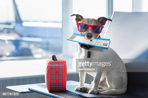 dog in airport terminal on vacation : Stock Photo