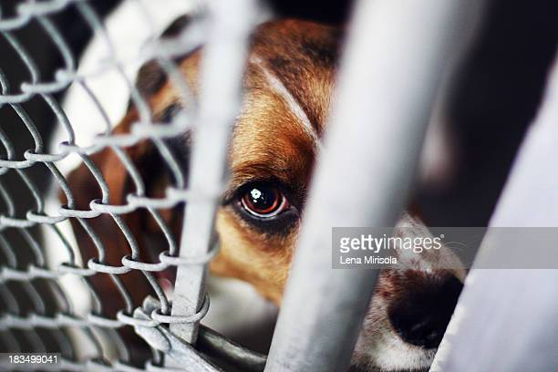 Dog in an animal shelter