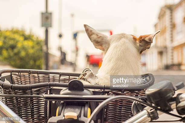 Dog in basket on bicycle