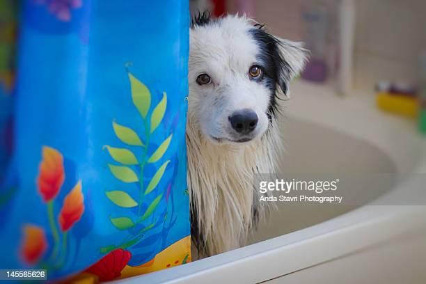 Dog in bath tub