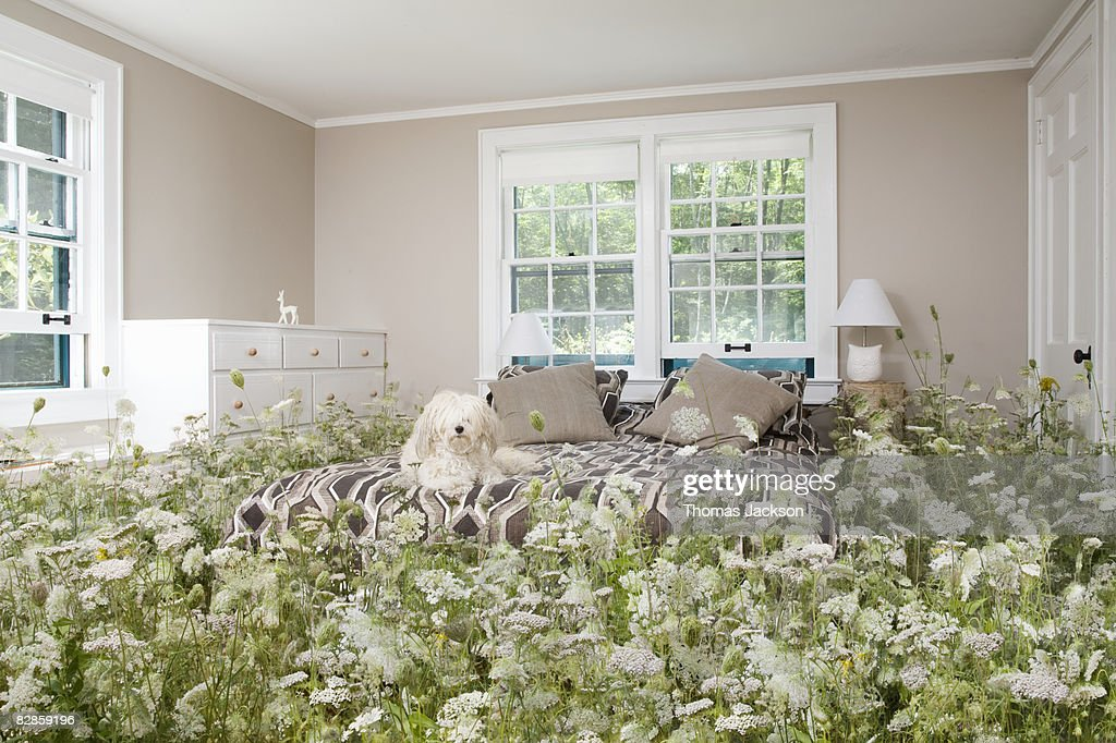 Dog in bedroom with wildflowers : Stock Photo