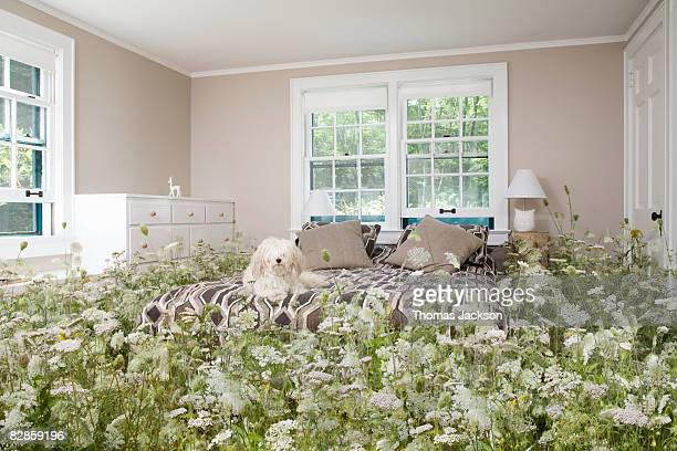 Dog in bedroom with wildflowers