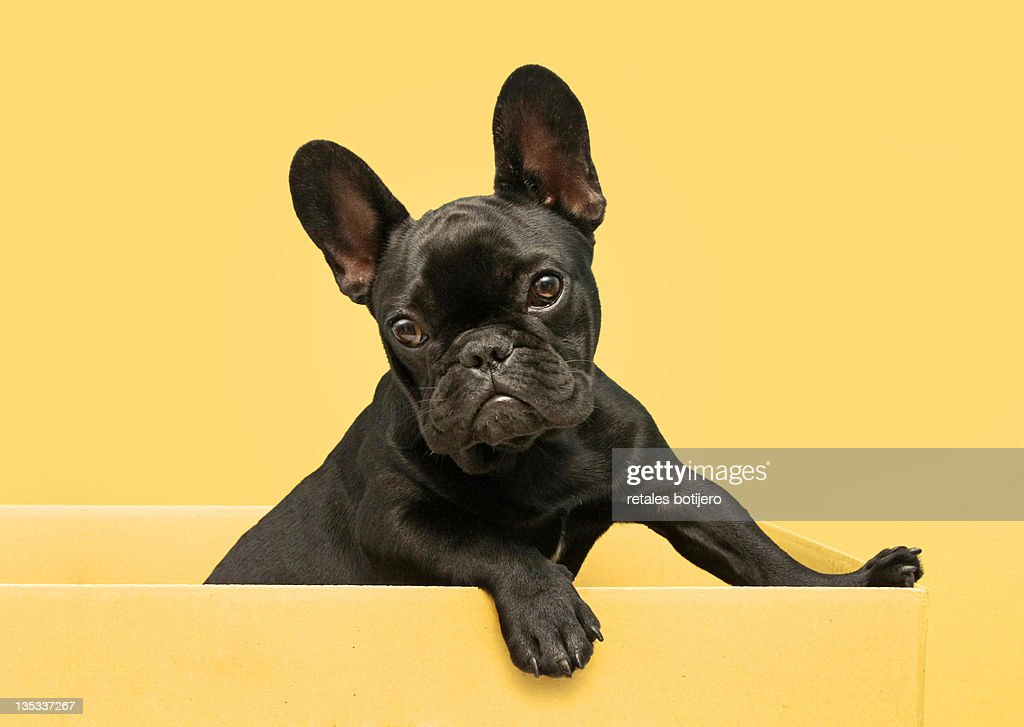 Dog in box : Stock Photo