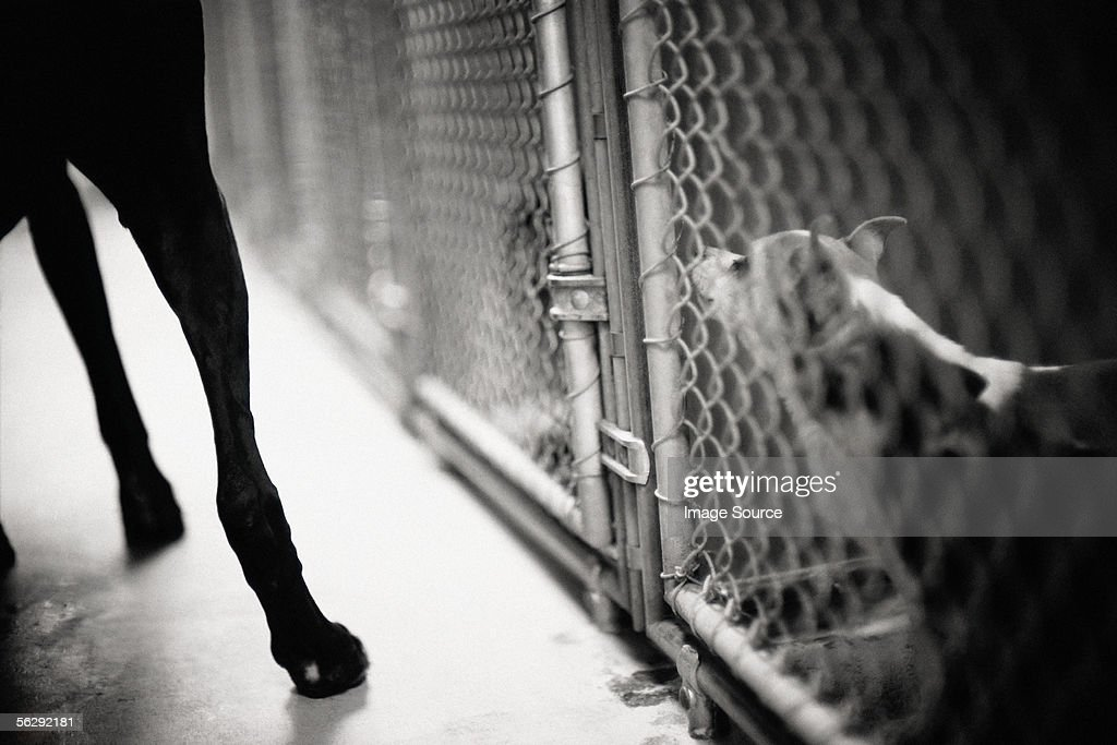 Dog in cage : Stock Photo