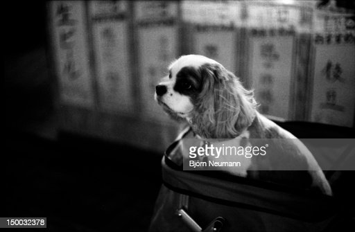 Dog in cart : Stock Photo