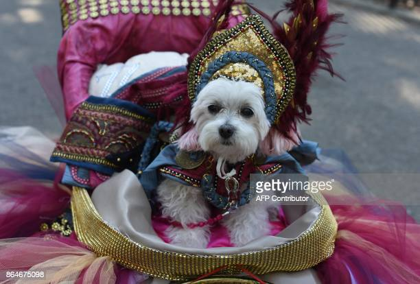 A dog in costume is seen during the 27th Annual Tompkins Square Halloween Dog Parade in Tompkins Square Park in New York on October 21 2017 / AFP...