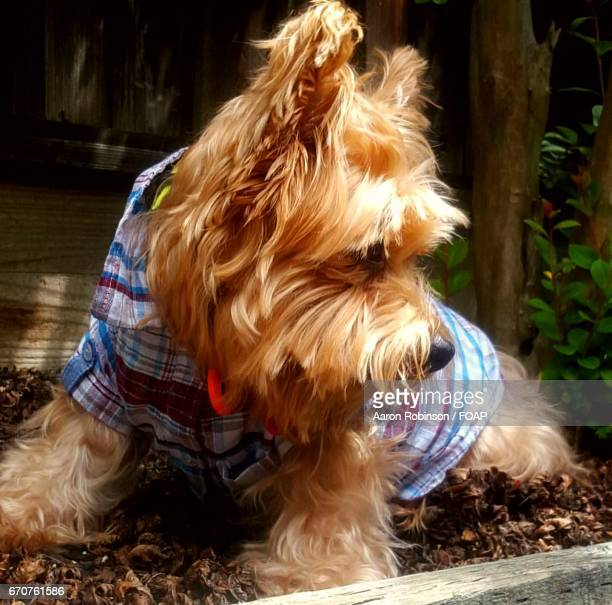Dog in costume outdoors