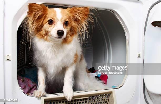 Dog in Dryer Machine