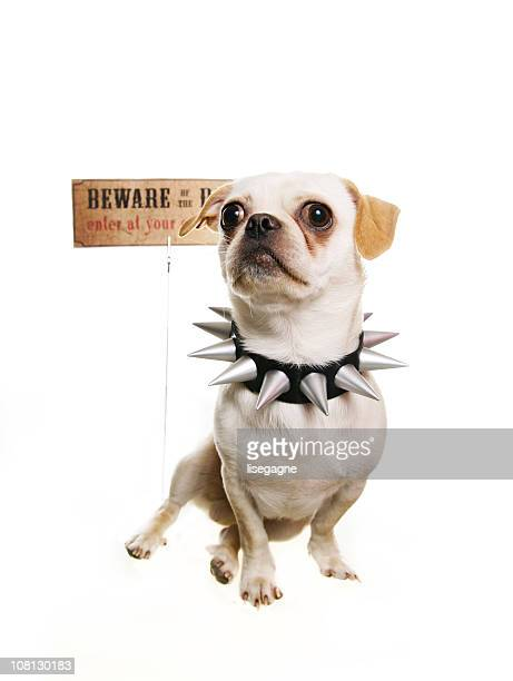 Dog in front of a Warning Sign