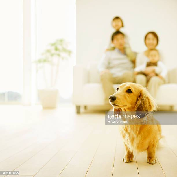Dog In Front Of Family