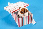Dog in gift box