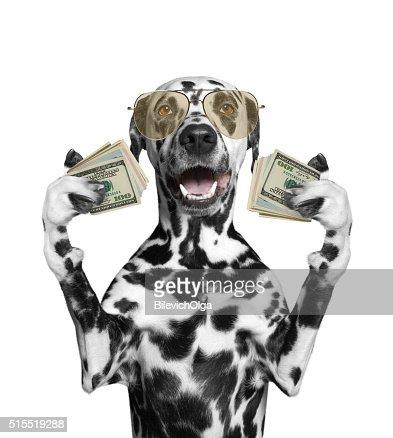 개에서 글라스잔 고정함 많은 돈을 : 스톡 사진