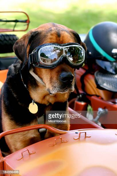 Dog in Goggles on Motorcycle