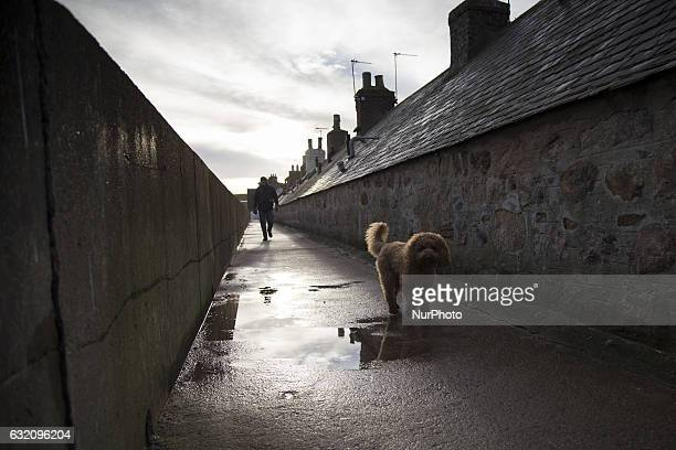 A dog in Harbour district in Aberdeen on January 9 2017