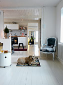 Dog in living room