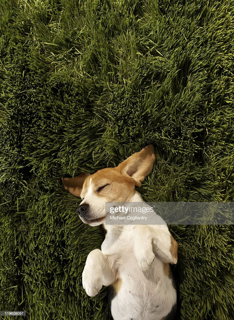 Dog in lying in grass sleeping : Stock Photo