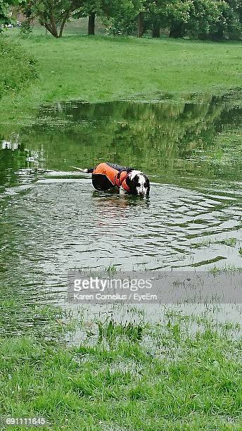 Dog In Puddle At Park