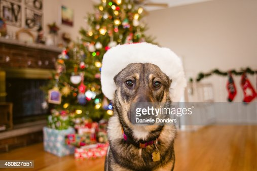 Dog in Santa hat in front of Christmas tree