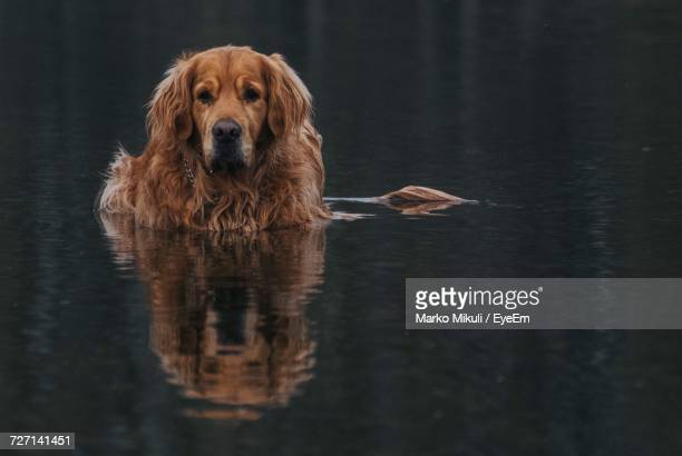 Dog In Shallow Water