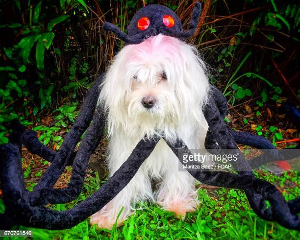 Dog in spider costume outdoors