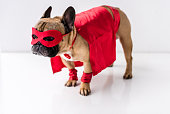 close-up view of adorable dog in superhero costume standing on white