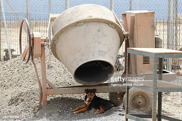 Dog in the animal shelter of Fasnia on August 18 2012 in Tenerife Spain