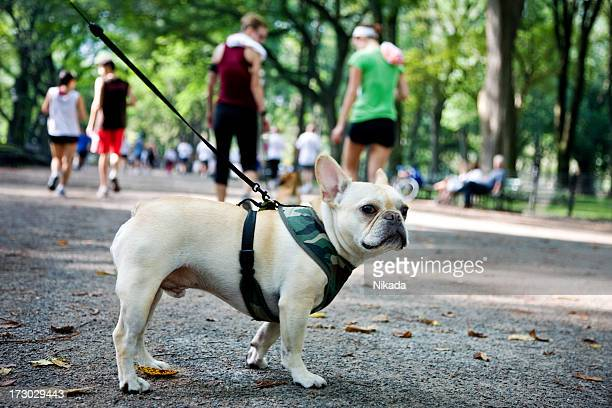 Dog in the Central Park, NY