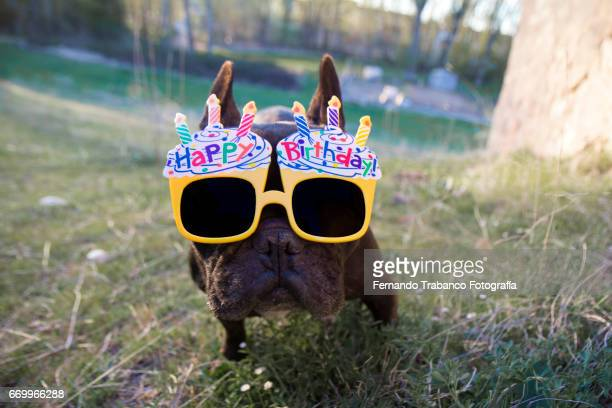 Dog in the meadow with funny sunglasses and happy birthday