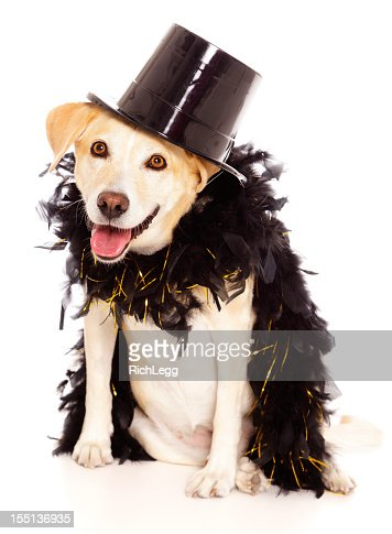 Dog In Tophat