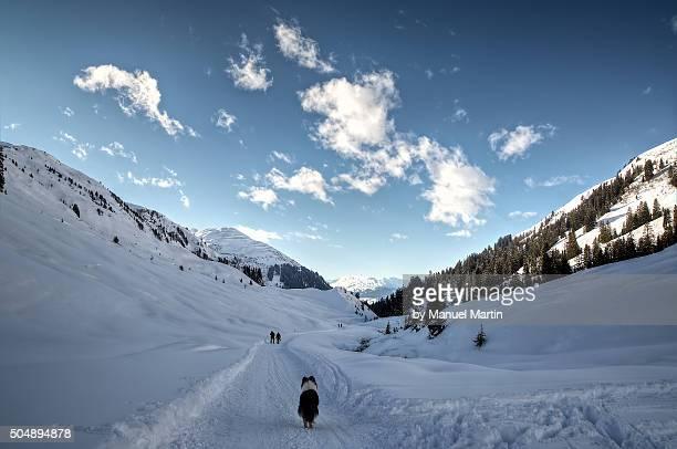 Dog in Winterwonderland