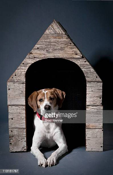 Dog in wood house