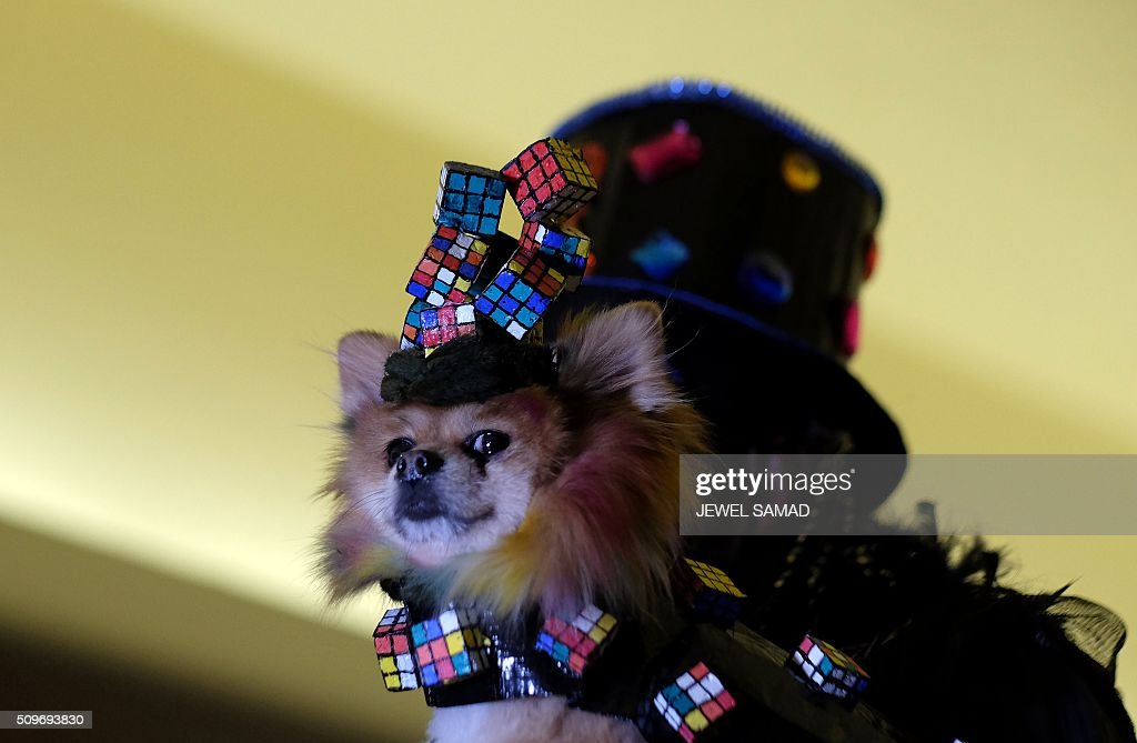 A dog is carries on the ramp to present an outfit during the Pet Fashion Show in New York on February 11, 2016. / AFP / Jewel Samad