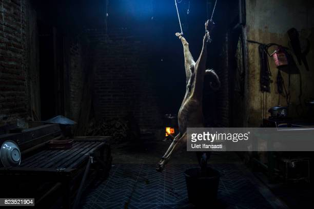 A dog is hung for slaughter at a dog meat butchery house on July 25 2017 in Yogyakarta Indonesia Indonesians have seen a surprising hike in dog meat...