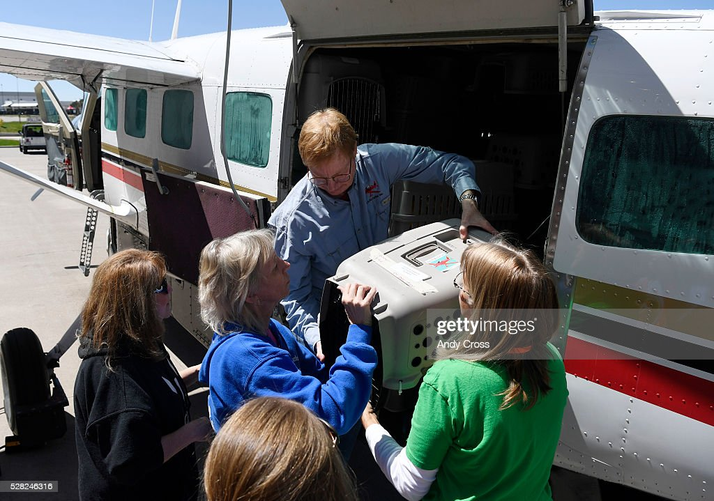 Dog is My Copilot president/founder and pilot Peter Rork helps to unload rescued dogs and cats at the TAC Air hanger May 04, 2016. Dog is My Copilot organization flew in over 90 rescue dogs and rescue cats from Texas and New Mexico to awaiting foster organizations at Centennial Airport May 04, 2016.