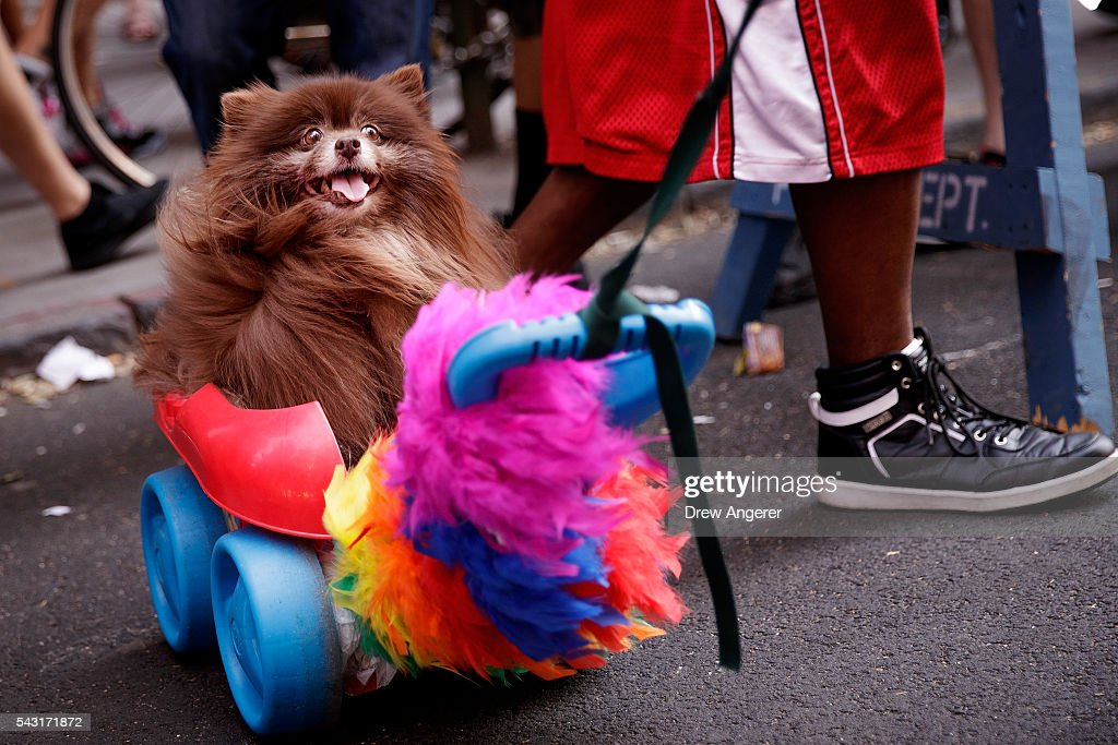 A dog is pulled through the crowd during the New York City Pride March, June 26, 2016 in New York City. This year was the 46th Pride march in New York City.