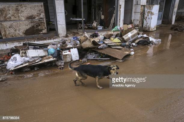 A dog is seen after torrential rains struck the west Athenian suburb of Mandra Greece on November 18 2017 At least sixteen people have been reported...