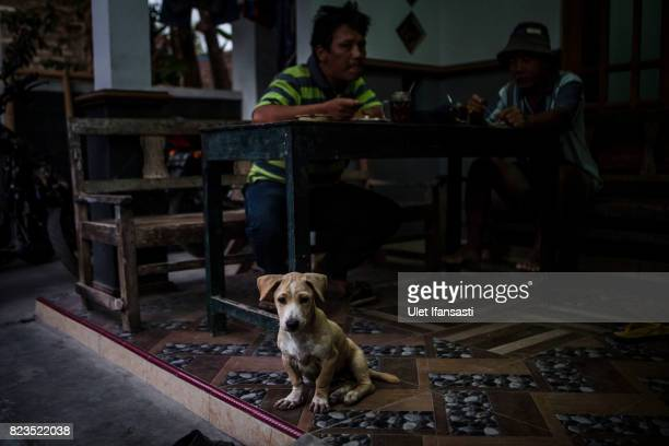 A dog is seen as customers eat dog meat known as 'tongseng' at restaurant specialising in dog meat on July 25 2017 in Yogyakarta Indonesia...